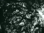 As You Like It - 1936 Image Gallery Slide 26