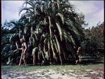 Wild Women Of Wongo - 1958 Image Gallery Slide 24