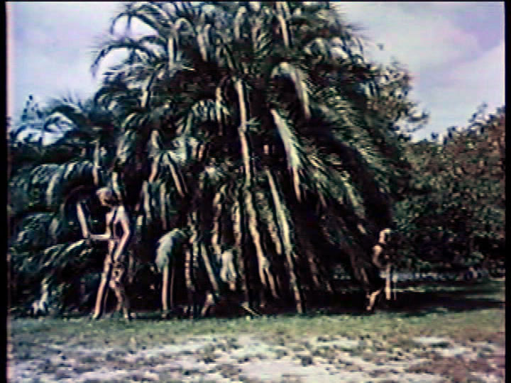 Wild Women Of Wongo 24