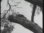 Robin Hood 057 – The Final Tax - 1956 Image Gallery Slide 2