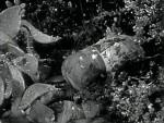 Oath of Vengeance - 1944 Image Gallery Slide 7