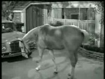 Mister Ed – Ed the Beneficiary - 1962 Image Gallery Slide 1
