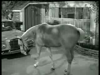 Mister Ed – Ed the Beneficiary 1