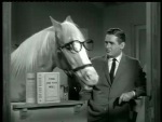 Mister Ed – Ed the Beneficiary - 1962 Image Gallery Slide 6