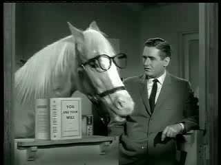 Mister Ed – Ed the Beneficiary 6
