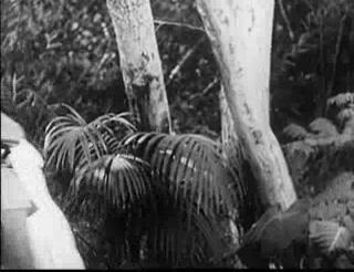 Tarzan's Revenge 15