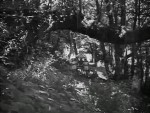 Bees in Paradise - 1944 Image Gallery Slide 8