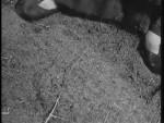 Robin Hood 112 – The Lottery - 1958 Image Gallery Slide 2