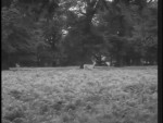 Robin Hood 119 – The Lady-Killer - 1958 Image Gallery Slide 1