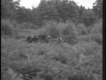 Robin Hood 119 – The Lady-Killer - 1958 Image Gallery Slide 8