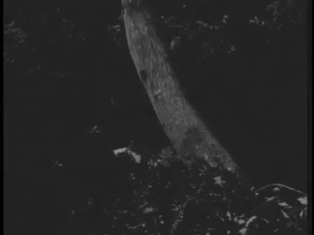 Robin hood 123 – The Loaf 11